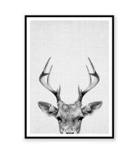 画像2: DEER HEAD 子鹿のモノクロ アート 動物ポスター (2)