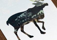 画像6: カリフォルニア Animals アニマル アートポスター (3枚組) (6)