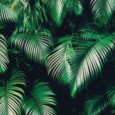画像2: Tropical Jungle Plants - トロピカル 植物 ポスター (2)