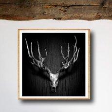 画像3: Deer Antler 鹿枝角 モノトーンポスター (3)