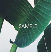 画像2: Tropical Banana Leaf トロピカル バナナ葉 アートポスター (2)