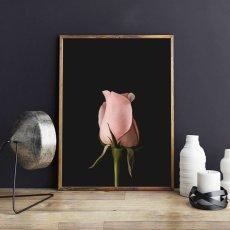 画像2: Black & Rose 薔薇 ポスター (2)