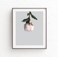 画像1: PEONY 牡丹 FLOWER お花 フローラル ポスター (1)