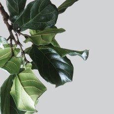 画像4: BOTANICAL ボタニカル GREEN 植物 おしゃれポスター (4)