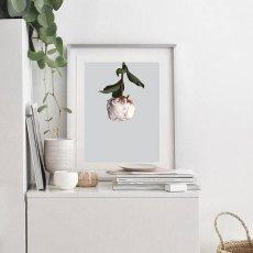 画像3: PEONY 牡丹 FLOWER お花 フローラル ポスター (3)