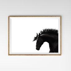 画像1: Manly Horse サラブレット 馬 モノトーン ポスター (1)