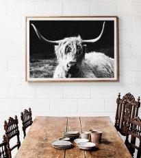 画像2: HIGHLAND COW 高原牛 アニマル モノトーン ポスター (2)