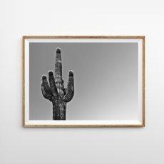 画像1: Joshua Tree  BIG Cactus サボテン モノトーン ポスター (W) (1)