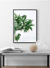 画像2: Tropical Island  大自然の恵み 植物 ポスター (2)