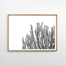 画像1: Lots Cactus サボテン 多肉植物 モノトーン ポスター (1)