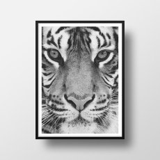 画像2: タイガー ★ TIGER FACE アニマル モノトーン アート 動物おしゃれポスター (2)