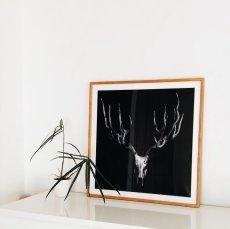 画像4: Deer Antler 鹿枝角 モノトーンポスター (4)