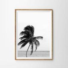 画像1: CALIFORNIA PALM TREE パームツリー  モノトーン ビーチ ポスター (1)