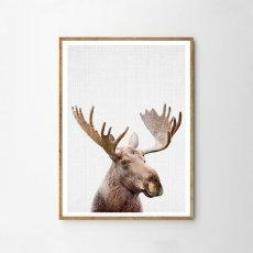 画像1: ムーズ Moose Head★ アニマル カラー アートポスター (1)