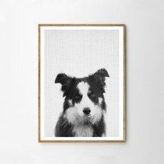 画像1: DOG ★ アニマル モノクロ アート 動物ポスター (1)