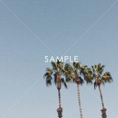 画像2: Deep blue sky & Palm Trees ポスター (2)