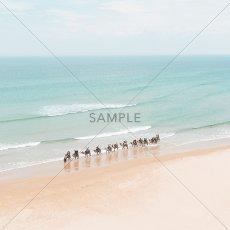 画像2: ラクダ on the Beach ポスター (2)