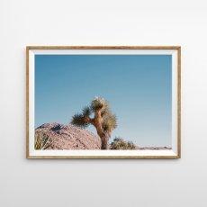 画像1: Joshua Tree ジョシュアツリー 青空とサボテン ポスター (1)