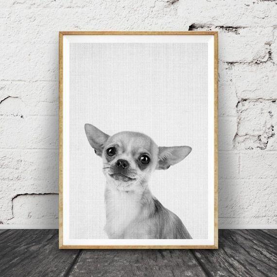 画像1: CHIHUAHUA チワワ アニマル モノクロ 動物ポスター (1)