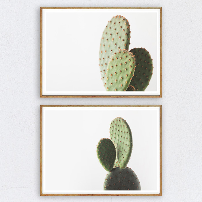 画像1: CACTUS サボテン 多肉植物 おしゃれポスター 2枚セット (1)