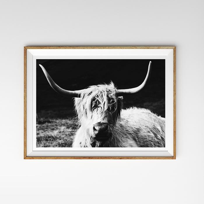 画像1: HIGHLAND COW 高原牛 アニマル モノトーン ポスター (1)