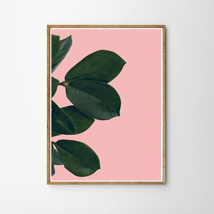 画像1: Botanic Pinkish 観葉植物 ポスター (1)