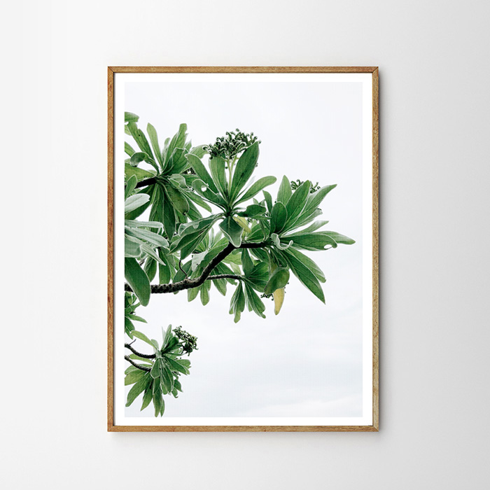 画像1: Tropical Island  大自然の恵み 植物 ポスター (1)