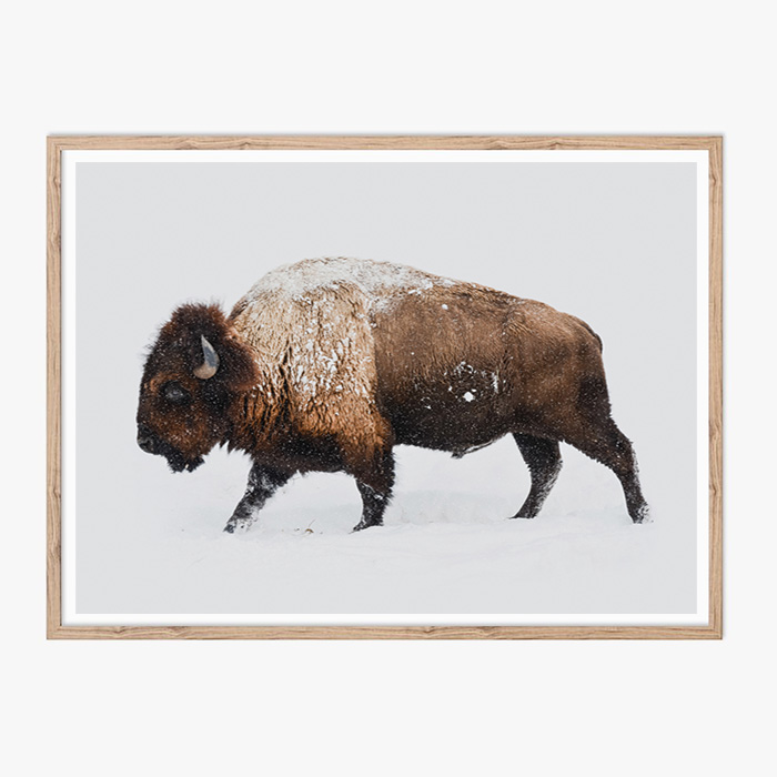 画像1: Buffaloバッファロー アニマルポスター (1)