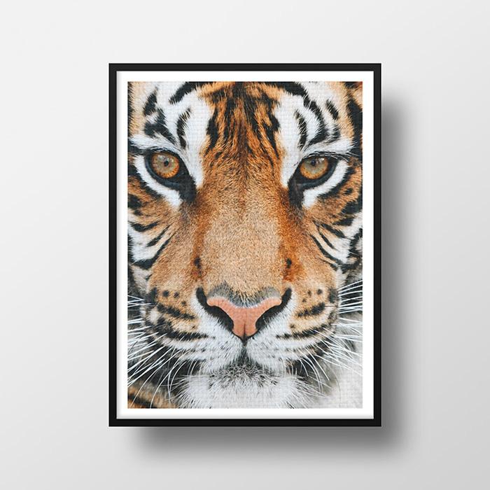 画像1: タイガー ★ TIGER FACE アニマル モノトーン アート 動物おしゃれポスター (1)