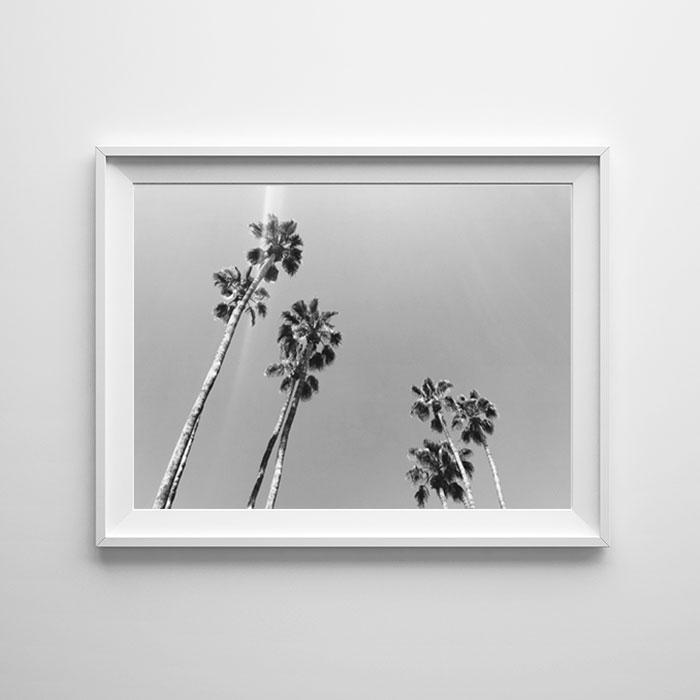画像1: カリフォルニア California Palm Tree パームツリー モノトーン ポスター 02 (1)