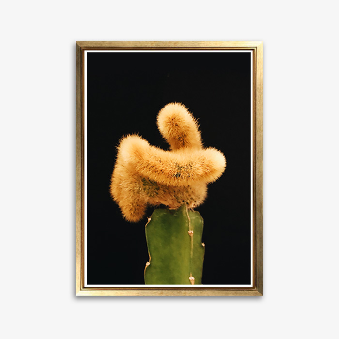 画像1: Little Cactus Black BG サボテン ポスター  (1)