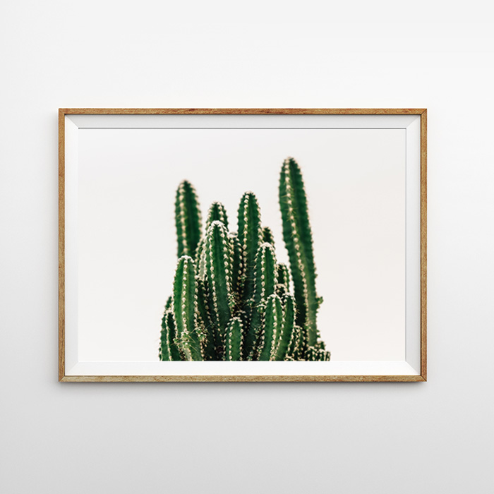 画像1: サボテン CACTUS 植物 スタイリッシュ ポスター  (1)