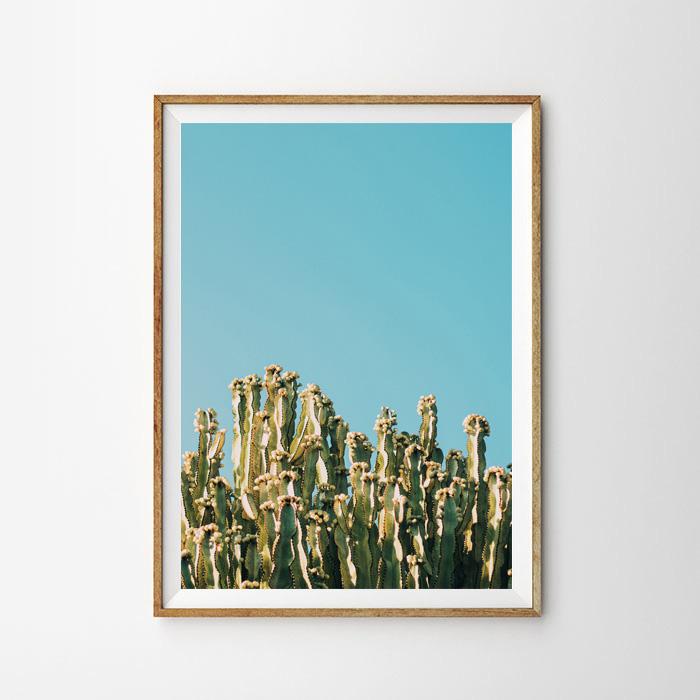 画像1: Blue de Cactus サボテン ポスター (1)