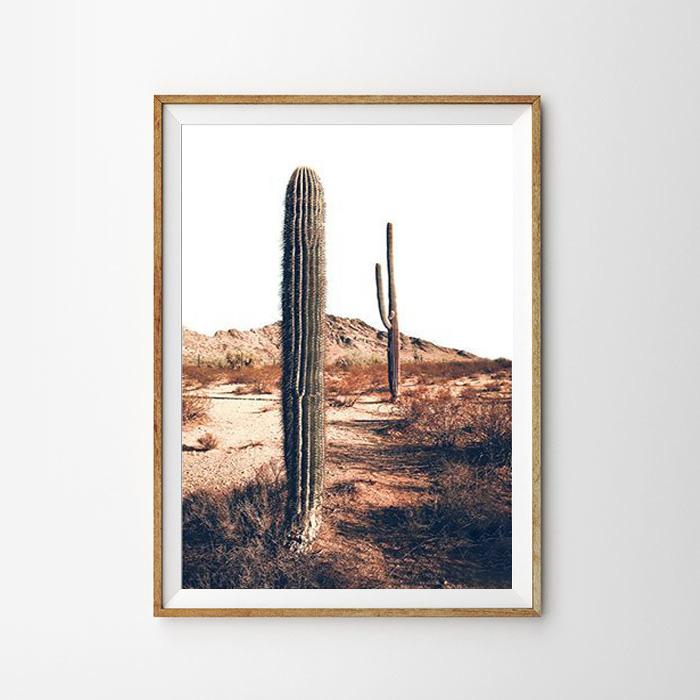 画像1: Arizona Landscape Cactus IN Desert - 砂漠に佇むサボテンポスター (1)