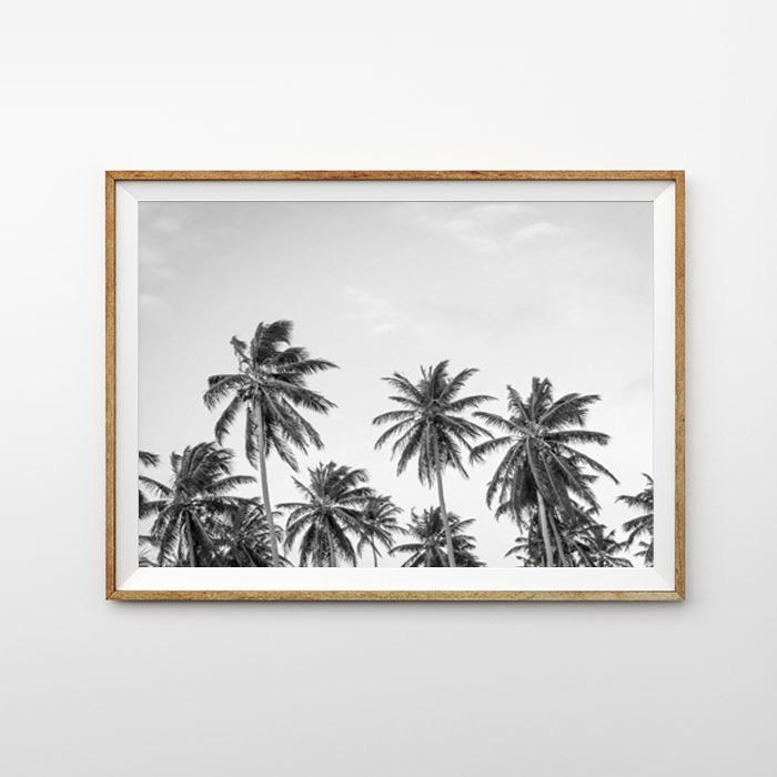 画像1: カリフォルニア California Palm tree モノトーン パームツリー ポスター (1)
