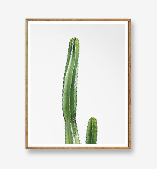 画像1: テキサス州 砂漠 サボテン アートポスター (1)