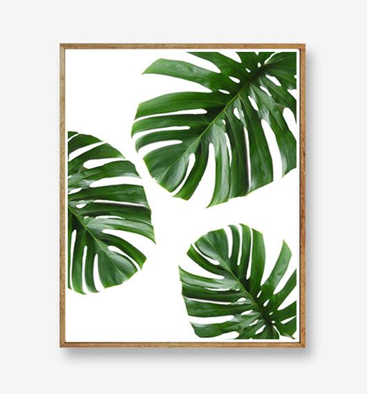 画像1: トロピカルリーフ 自然グリーン ポスター (1)