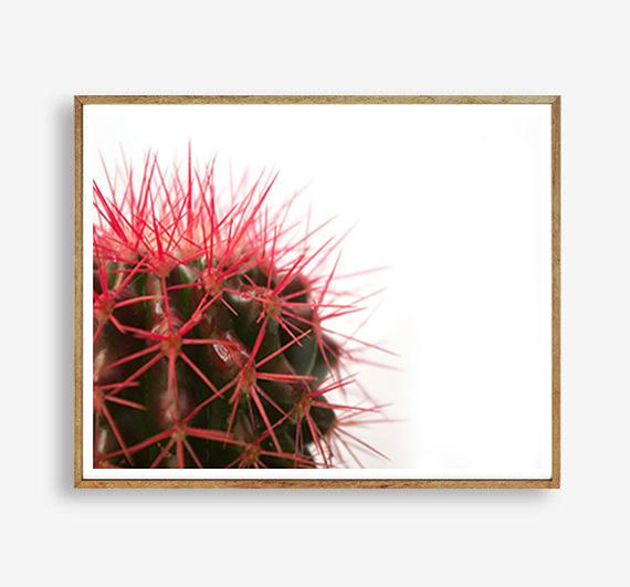 画像1: サボテン Red Spikes ポスター (1)