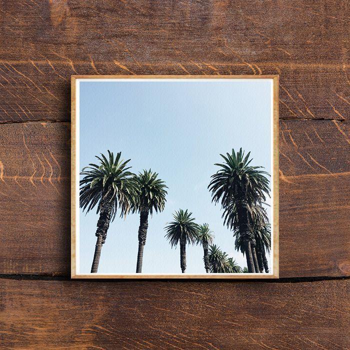 画像1: PALM TREES パームツリー Blue Sky 自然ポスター (1)