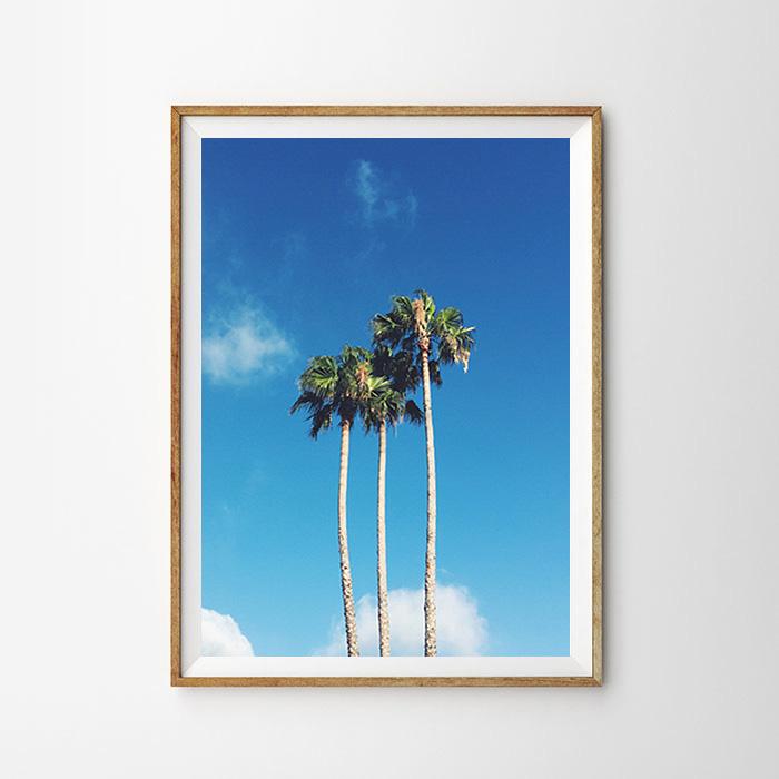 画像1: カリフォルニア パームツリー & ブルーススカイ  ポスター (1)