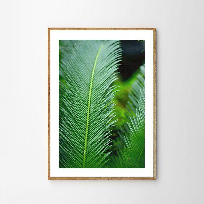 画像1: Tropical Jungle Leaf トロピカル 植物 ポスター (1)