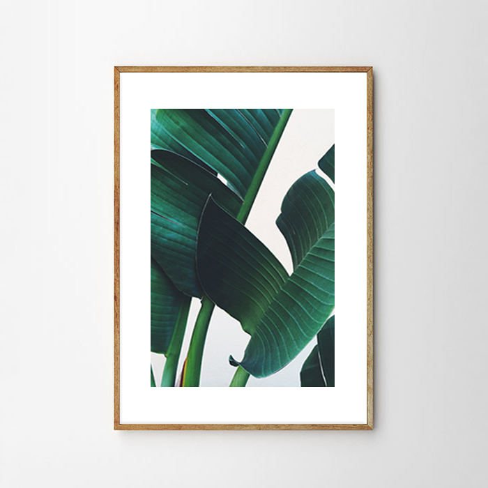 画像1: Tropical Banana Leaf トロピカル バナナ葉 アートポスター (1)