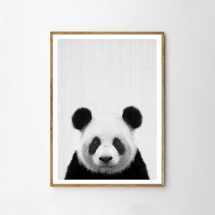 画像1: パンダ ★ アニマル モノクロ アート 動物ポスター (1)