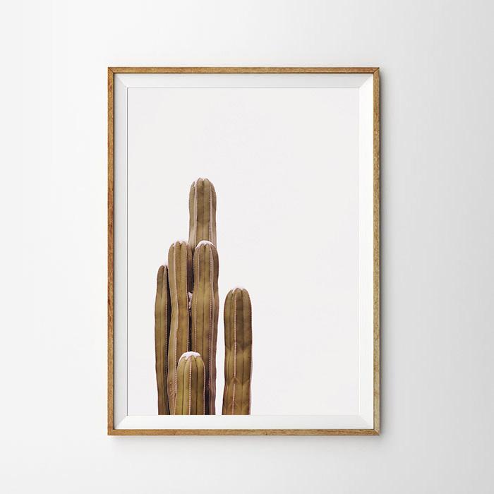 画像1: サボテン 自然 ポスター  (1)