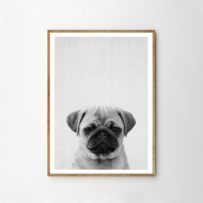 画像1: パグ 犬 ★ アニマル モノトーン アニマル ポスター (1)