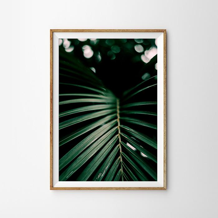 画像1: Jungle Dark Green 新緑 ポスター  (1)