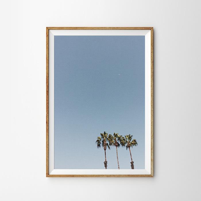 画像1: Deep blue sky & Palm Trees ポスター (1)