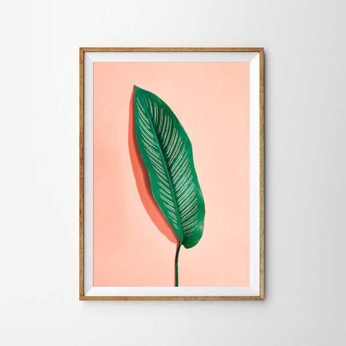 画像1: One Leaf ピンクバックグラウンド ポスター (1)