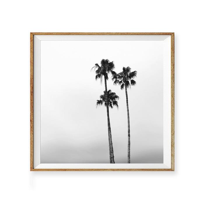 画像1:  Palm Trees Square Shape モノトーン ポスター (1)