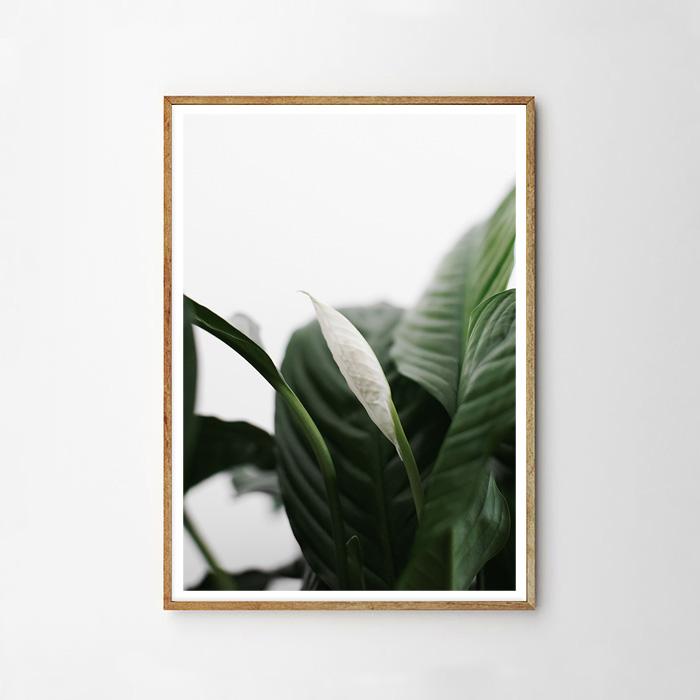 画像1: GREEN PLANS 植物 ポスター (A) (1)